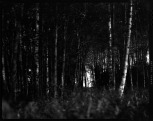 """Metsän portti, Gate of the Forest"", 2010, B&W photograph, pigment print, 100x130cm, edition 1/5 ©Veli Granö"