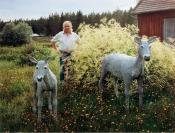 Mikko Torppa, Veteli © Veli Granö 1986