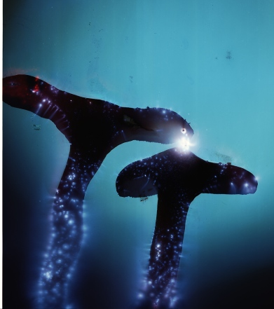 Kirlian photograph, 2011