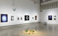 Killian photos, glass and ice sculptures on political motivated violence. Gallery Hippolyte Helsinki 2020. ©Veli Granö